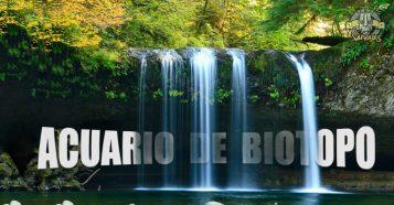 Como montar un acuario biotopo