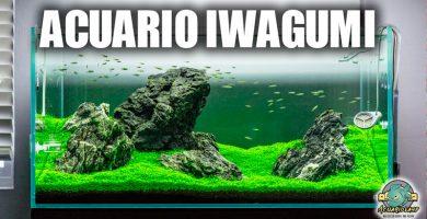 aCUARIO iWAGUMI