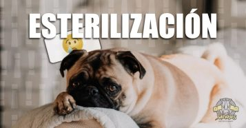 Vale la pena esterilizar al perro ?