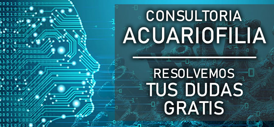 Consultoria acuariofilia