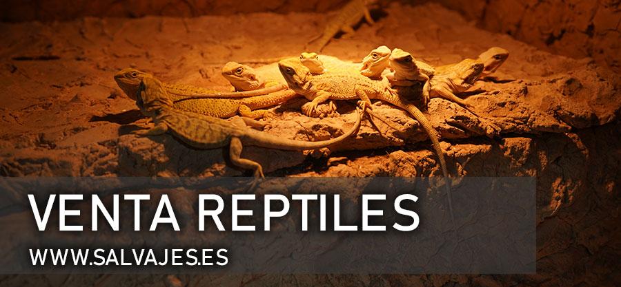 Venta de reptiles